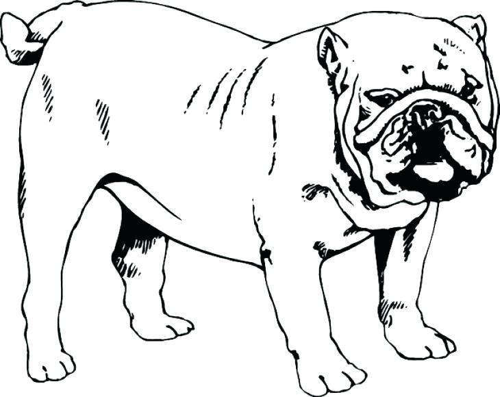 730x580 Bulldog Coloring Sheets Bulldog Coloring Pages Georgia Bulldogs