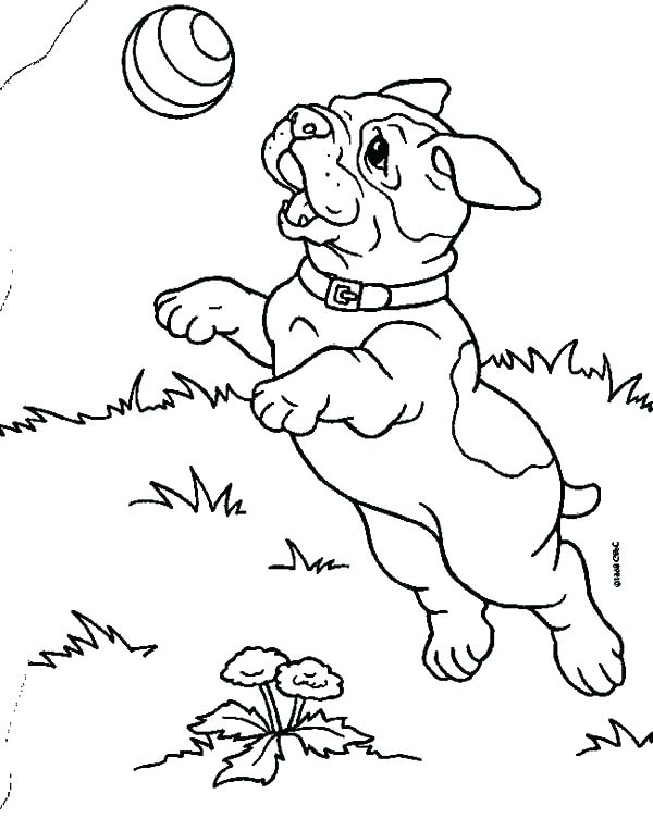 600x753 French Bulldog Coloring Page French Bulldog Georgia Bulldogs