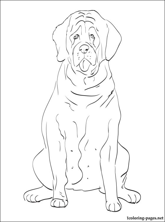 560x750 English Setter Coloring Page Coloring Pages