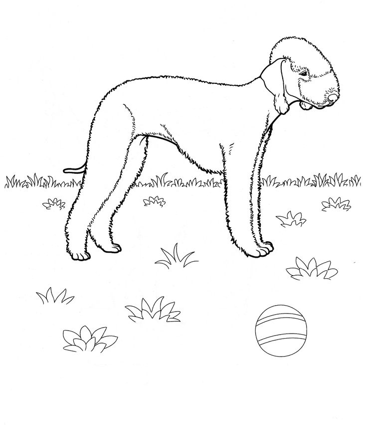 English Mastiff Coloring Pages