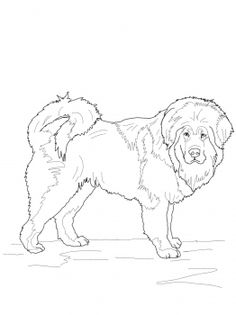 236x315 English Mastiff Coloring Page Dogs Category Select