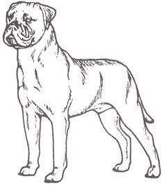 236x267 Irish Setter Coloring Page Art Irish Setter, Dog