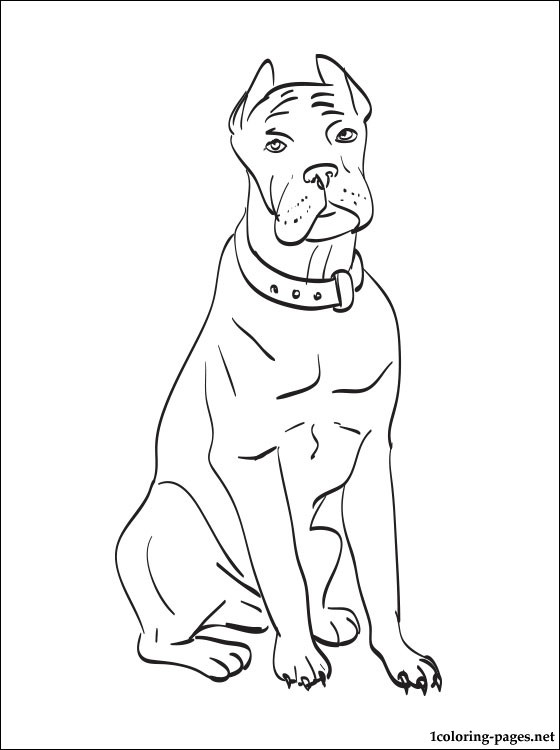 Boxer Dogs Coloring Pages for Kids – Animal Coloring Pages and ... | 750x560