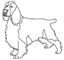 216x200 English Springer Spaniel Coloring Page Dog Patterns