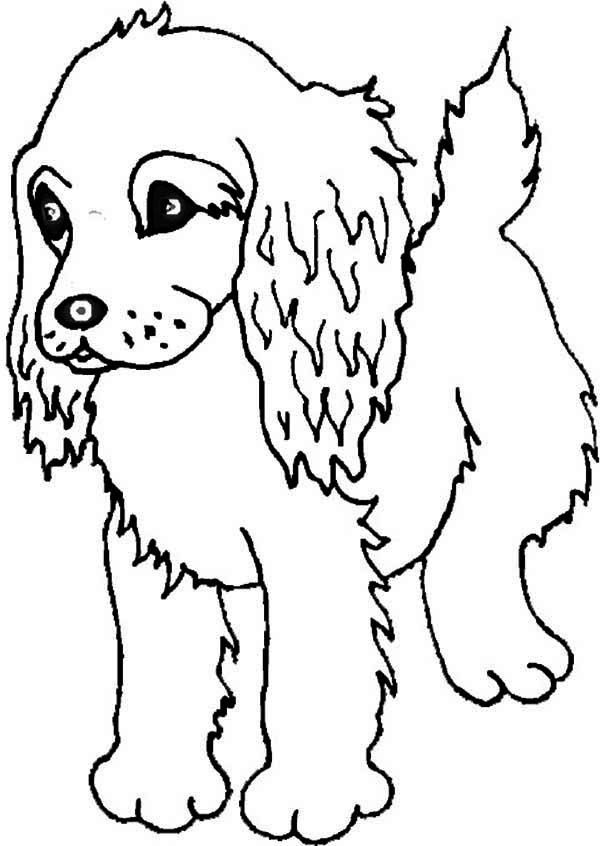600x846 Boykin Spaniel Puppy Coloring Page Free,puppies Coloring Pages