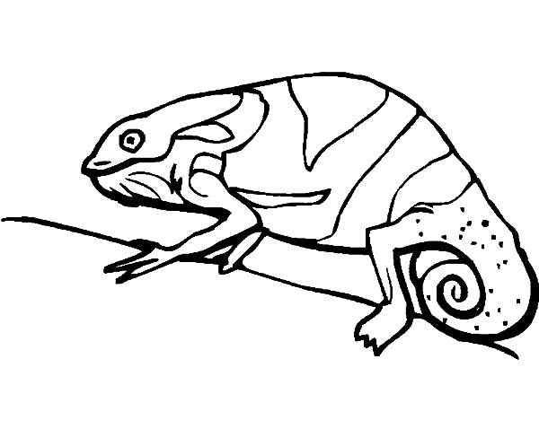 600x478 Chameleon Adapt To Environment Coloring Pages Best Place To Color