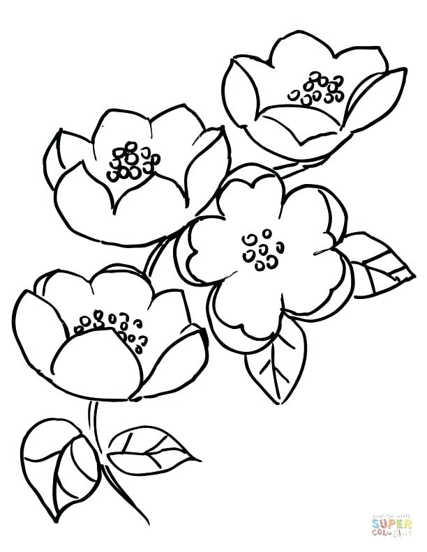 612x792 Apples Coloring Page Apple Blossom Branch Ever After High Apple