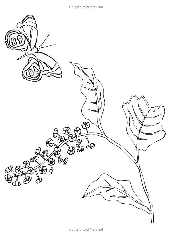600x825 Madeline Coloring Pages Cedar Wood Raven Queen Hatter Cerise Hood