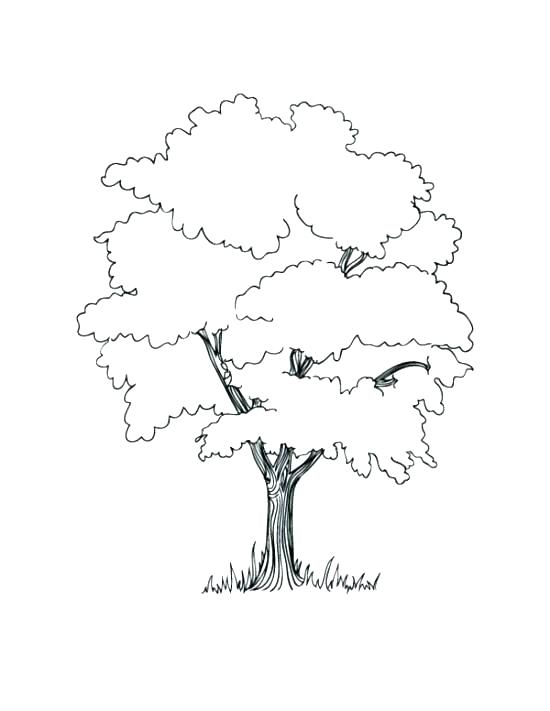 550x711 Coloring Pages Trees Evergreen Tree Printable Adult Coloring Pages