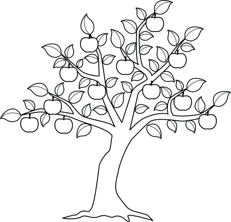 736x708 Dollar Tree Coloring Pages Tree Coloring Book As Well As Coloring