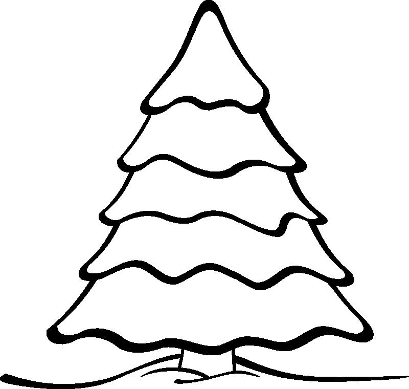 800x760 Evergreen Tree Drawings