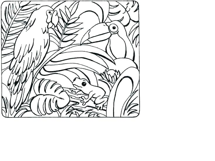 736x552 Tropical Coloring Pages Plants Coloring Pages Tropical Coloring