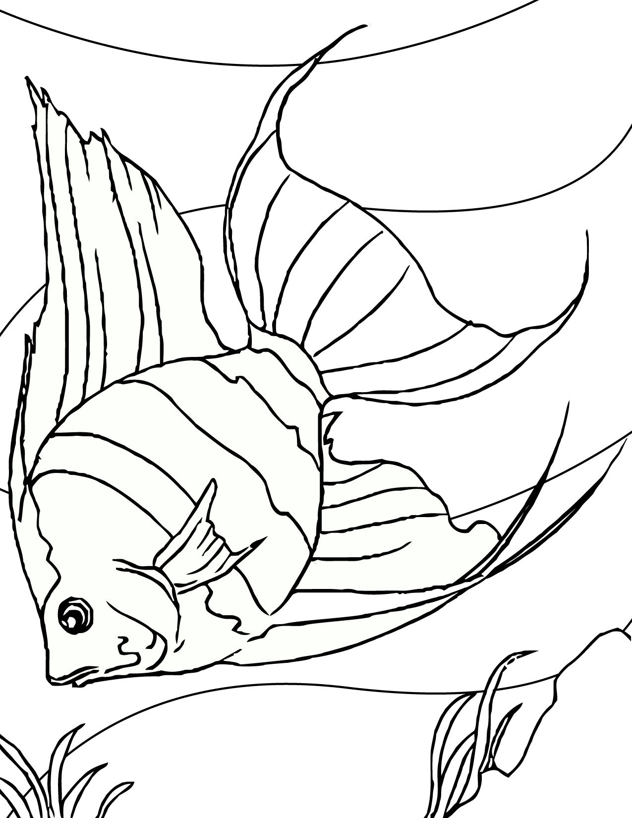 1275x1650 Angelfish Coloring Page