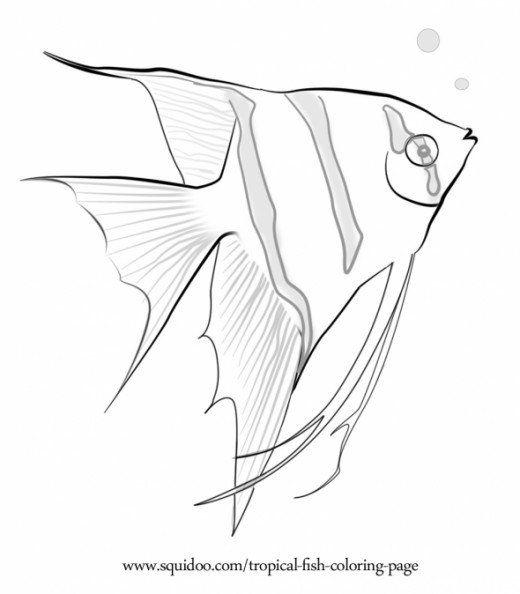 520x594 Tropical Fish Coloring Page Marine Fish, Tropical Fish And Aquariums