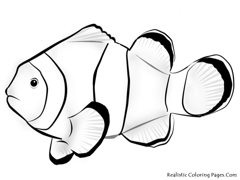1024x768 Tropical Fish Coloring Pages Download This Printable Nemo Fish