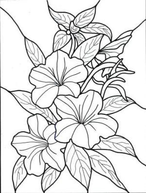 300x395 Exotic Flower Coloring Pages Hawaiian Flower Colouring Pages