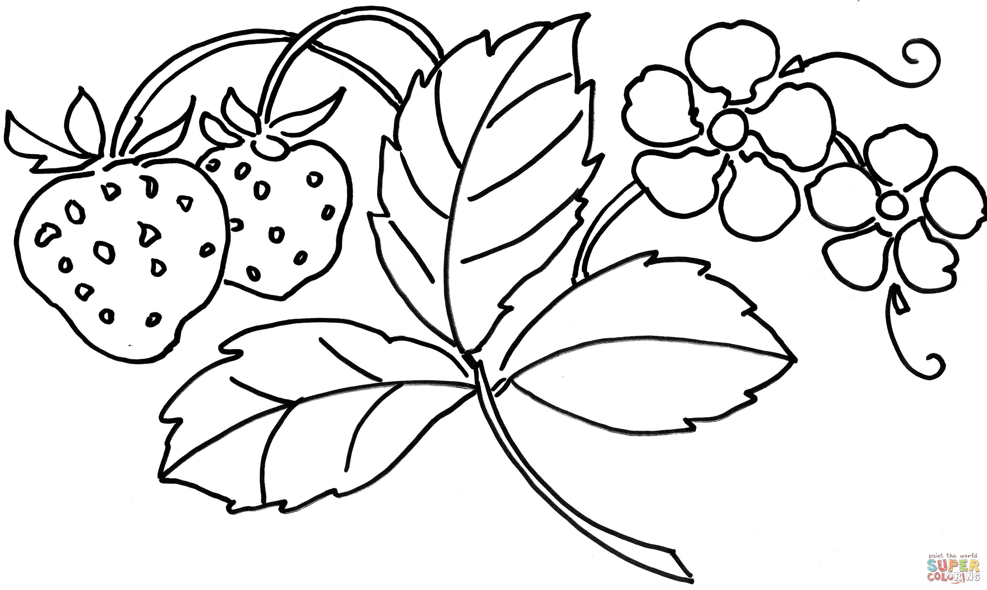 3420x2045 New Coloring Tropical Flower Coloring Pages For Adults Ly Exotic