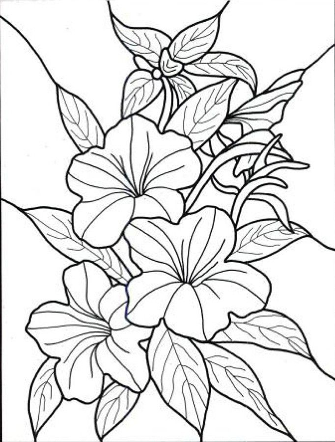 682x900 Tropical Flowers Stained Glass Coloring Book Hand Drawn