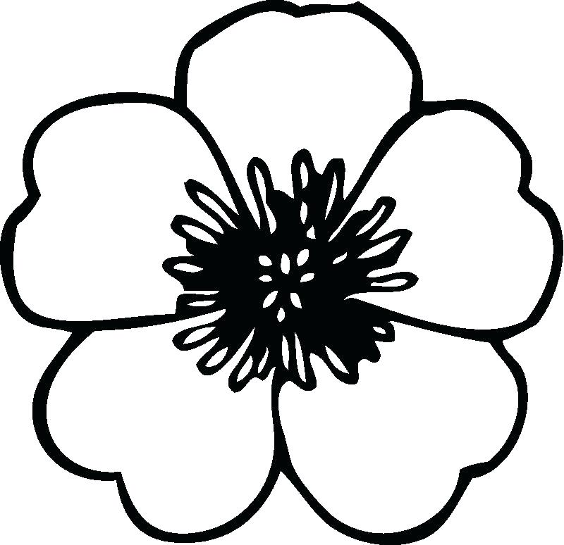 800x774 The Breathtaking Photo Below Is Segment Of Flower Coloring Pages