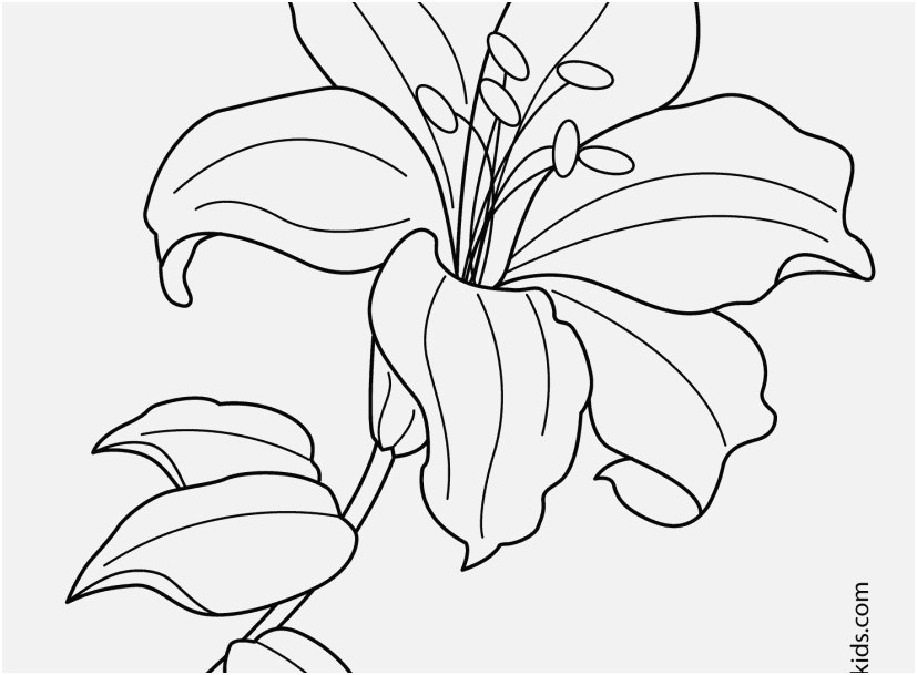 827x609 The Ideal Photo Flower Coloring Pages Famous