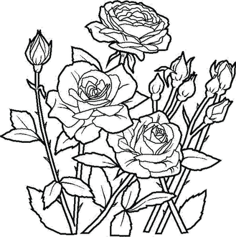 1000x1006 Best Of Tropical Flower Coloring Pages Printable Collection