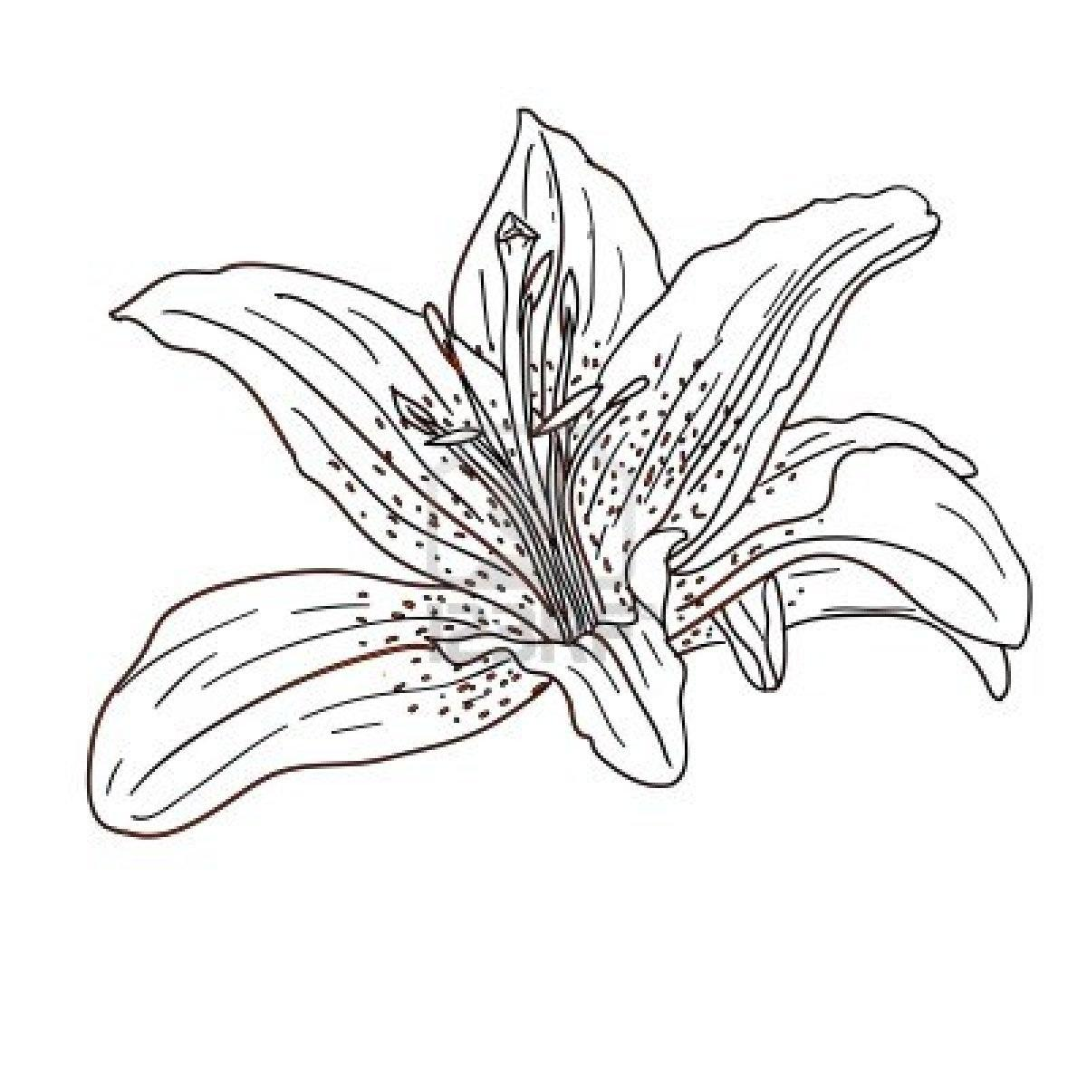 1200x1200 Tropical Flower Coloring Pages