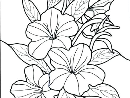 440x330 Tropical Flower Coloring Pages Printable