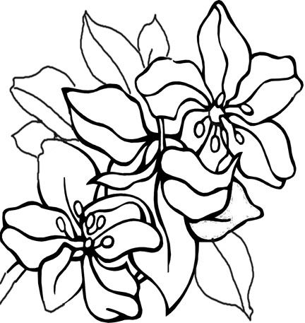 432x457 Coloring Pages Of Cool Designs Free Coloring Pages With A Feel