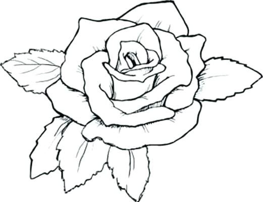 521x400 Decorating Tips For Renters Tropical Flower Coloring Pages Flowers