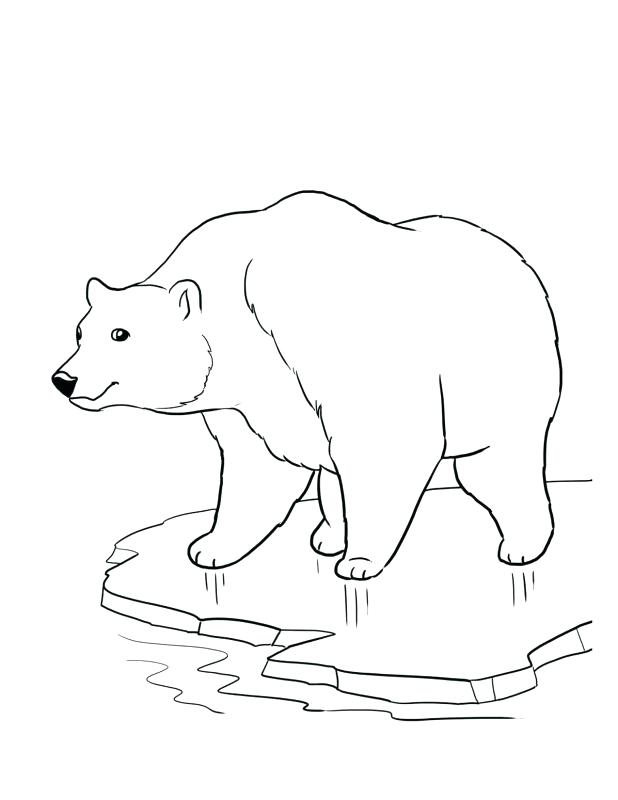 618x800 Endangered Species Coloring Pages Color Sheets Of Polar Bears