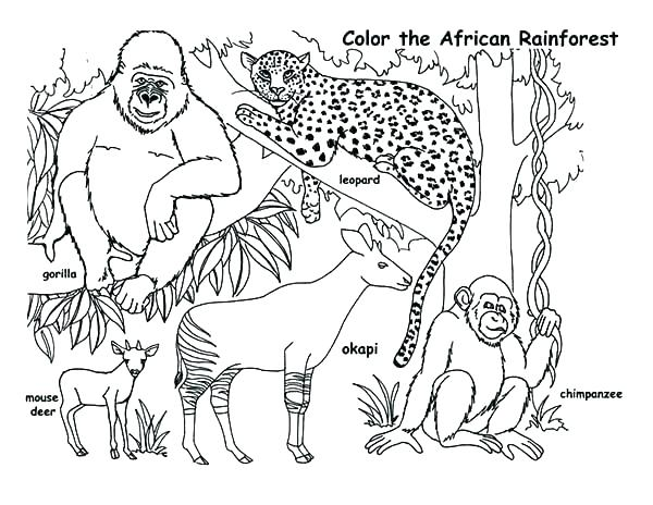600x464 Endangered Species Coloring Pages Endangered Species Coloring