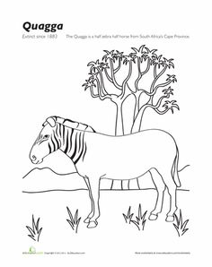 236x298 Extinct Animals Coloring Page Thylacine Extinct Animals