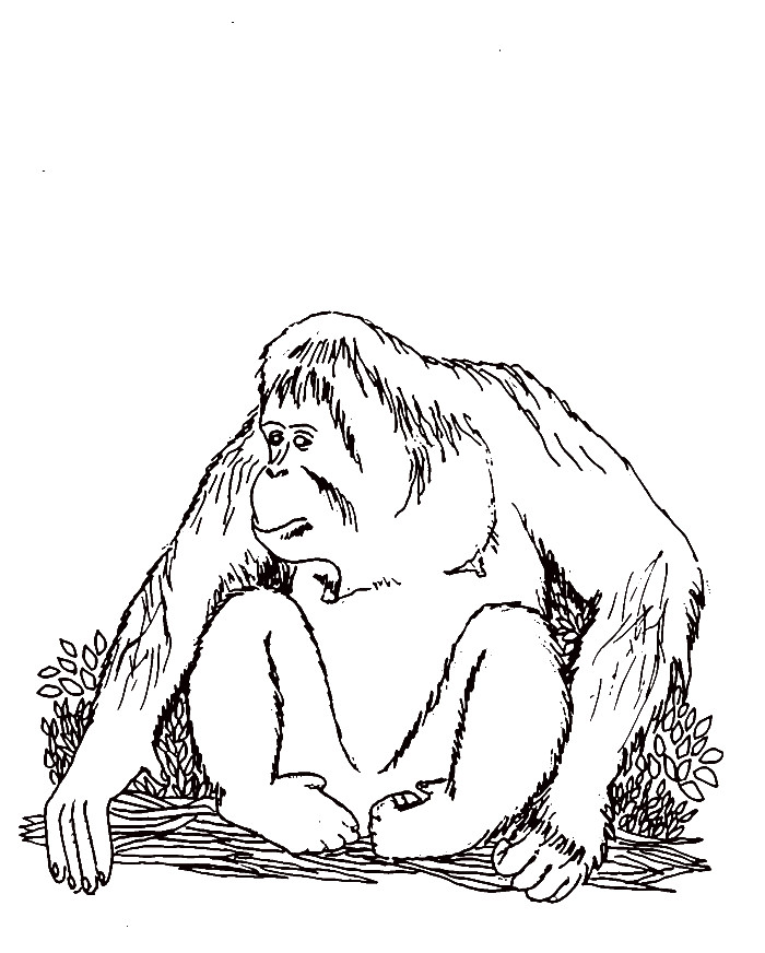 700x872 Extinct Animals Coloring Pages Unique Orangutan Coloring Pages