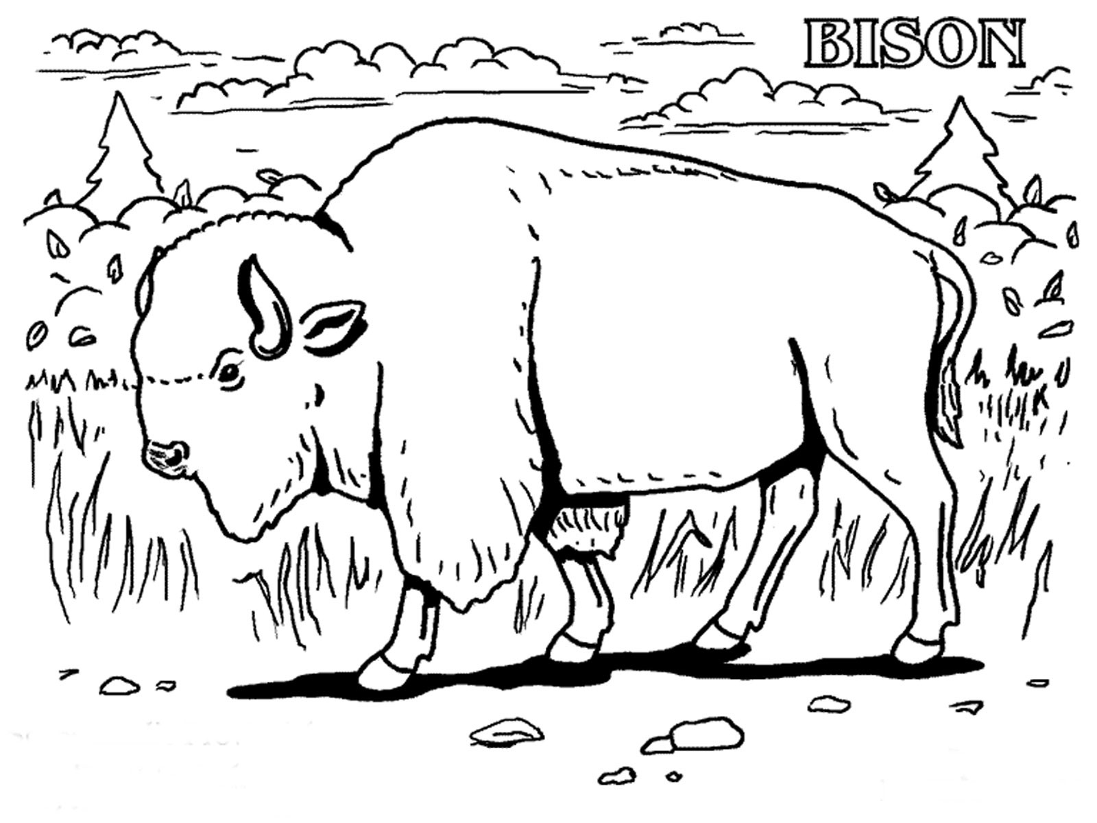 1600x1200 Free Printable Bison Coloring Pages For Kids