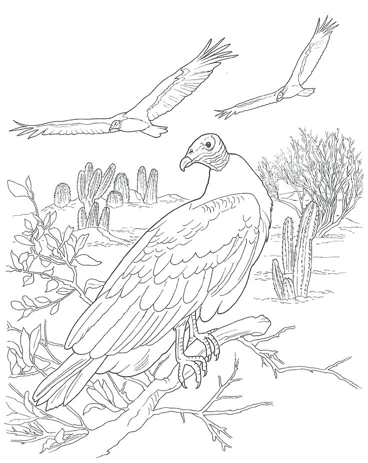 736x927 Desert Animal Coloring Pages Extinct Animals Coloring Pages Desert