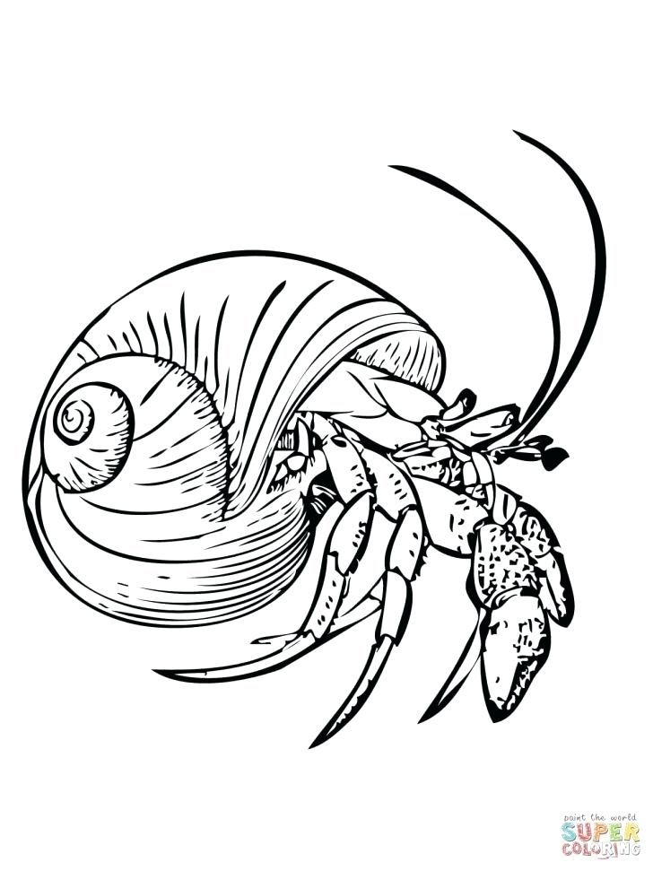 728x971 Crab Big Eyes Coloring Page Printable Pages Common Hermit Or Free