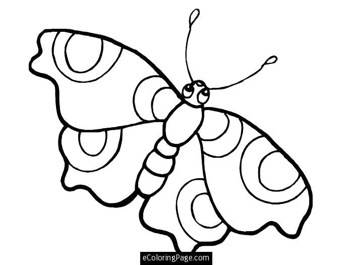 700x525 Uncategorized Butterfly Big Eyes Coloring Pages For Printable