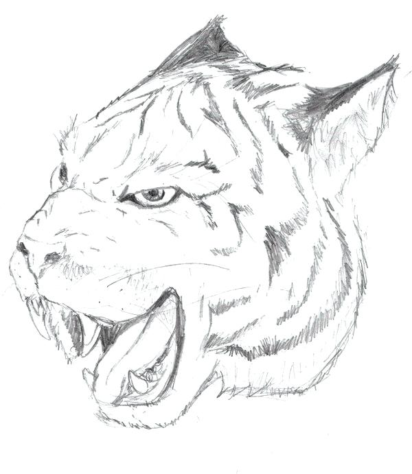 600x691 Free Tiger Face Coloring Page Tiger Face Coloring Pages