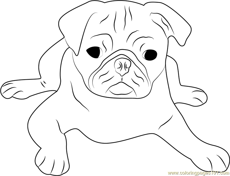 800x612 Cute Pug Face Coloring Page