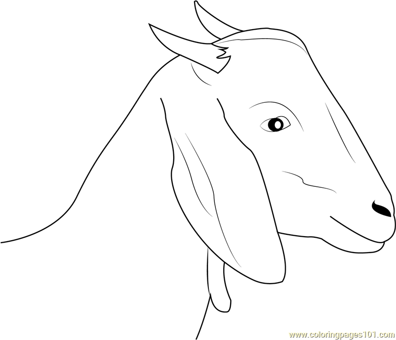800x688 Goat Face Coloring Page