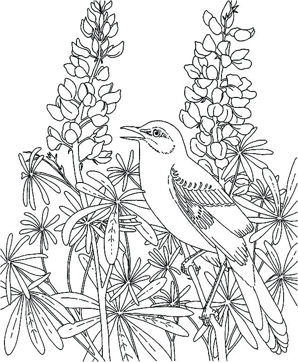 600x728 Garden Fairies Coloring Pages Coloring Pages Of Fairies Fairies