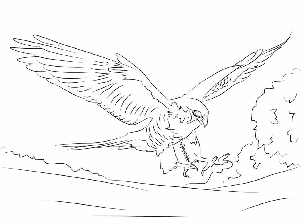 Falcon Coloring Pages At Getdrawings Com Free For Personal