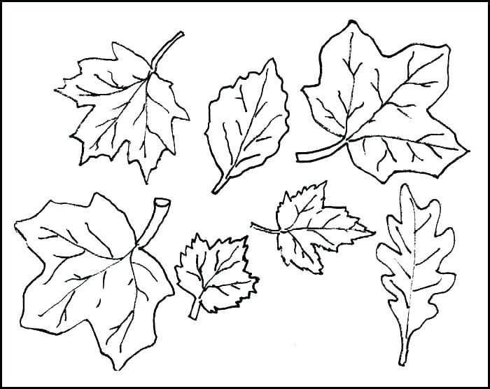 700x555 Free Printable Fall Leaves Coloring Pages