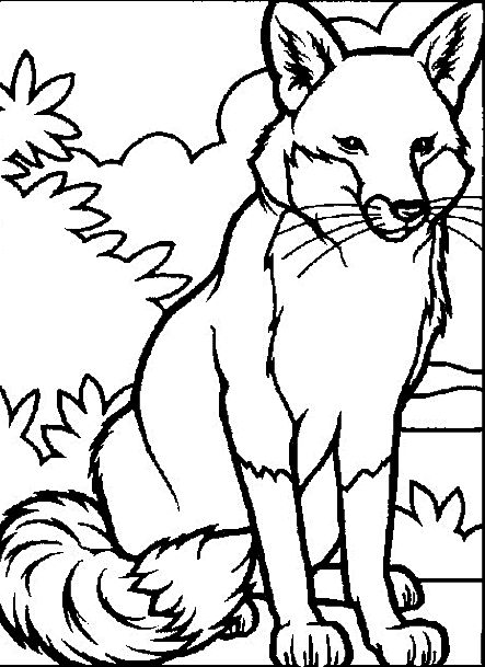 443x609 Animal Coloring Pages