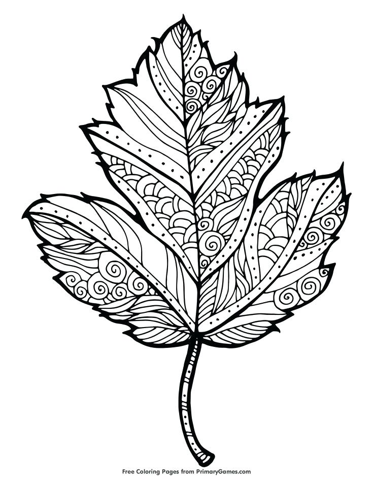 735x951 Autumn Coloring Pages For Adults Educational Coloring Pages