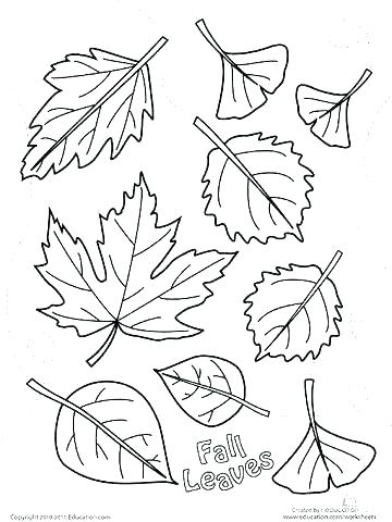 360x480 Fall Coloring Sheets For Adults