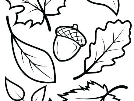440x330 Leaf Coloring Pages Printable Vanda