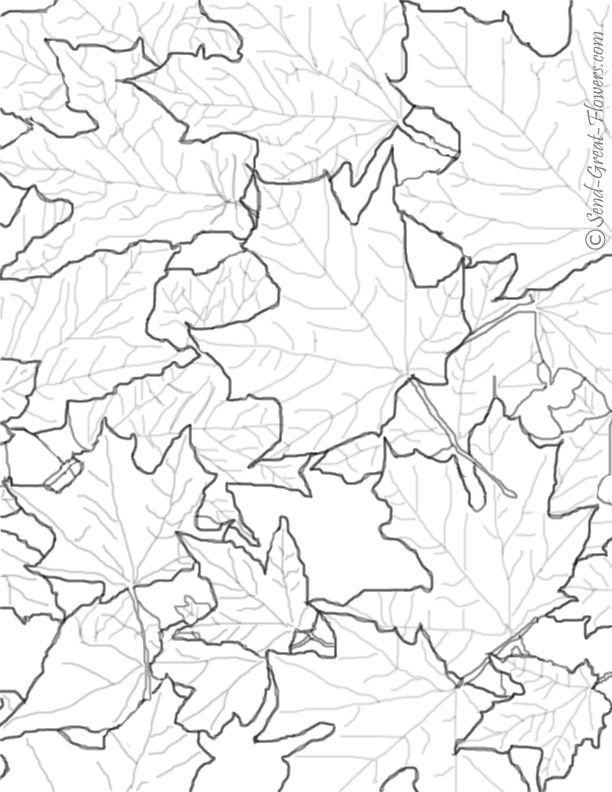 612x792 Fall Flowers Coloring Pages Printable
