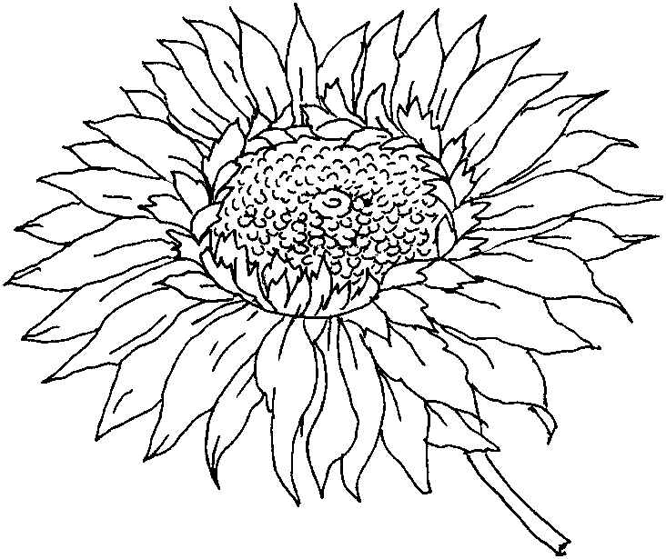 732x615 Flower Coloring Pages For Adults Flower Coloring Sheet Neddle