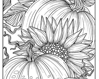 340x270 Pumpkins And Sunflower Digital Coloring Page Fall Adult